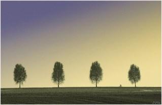 paysage (8) copie